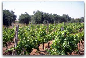 Sardenj� ver� e kuqe